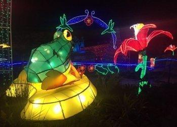 Monserrate lights