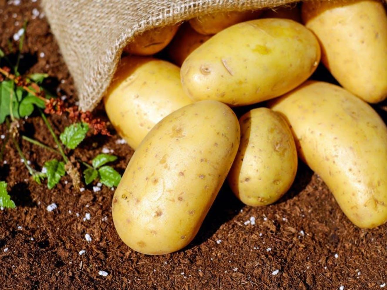 Colombian potatoes