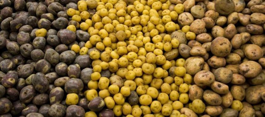 Colombian potatoes1