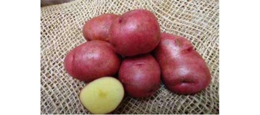Rubi Potatoes