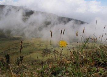 Chingaza Páramo