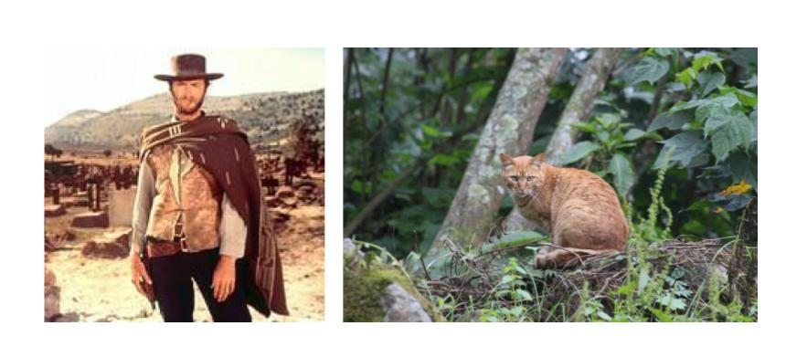 Wild cat at the park /cowboy
